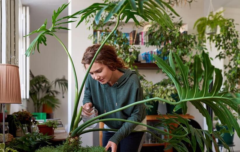 نگهداری گل و گیاه در منزل