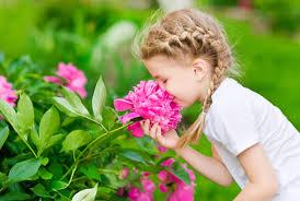 تاثیر گل و گیاه بر محیط